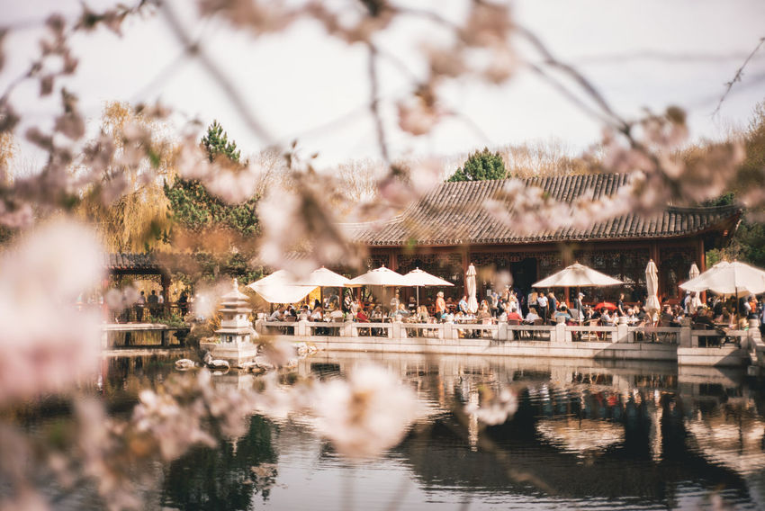 Kirschblütenfest Asian  Asian Culture Cherry Blossoms Architecture Building Building Exterior Built Structure Cherryblossom City Crowd Day Focus On Background Group Of People Lake Large Group Of People Nature Outdoors Plant Selective Focus Sky Tree Water Waterfront