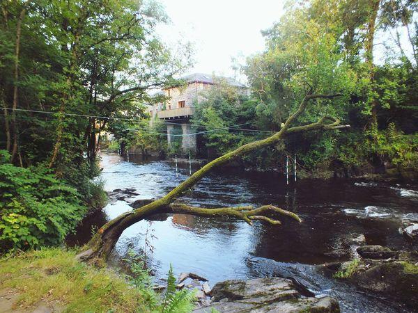 Trees Tree Water River Riverside River View Water_collection Llandysul Wales Building Buildings From Where I Stand West Wales