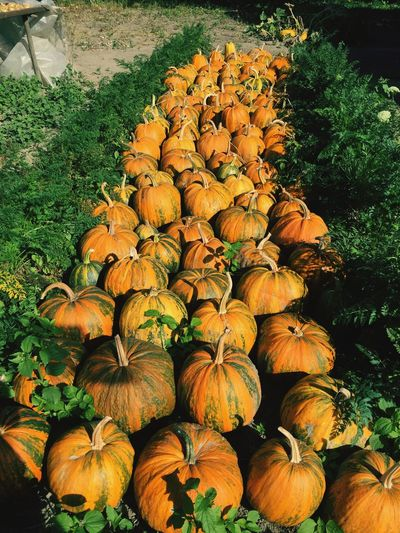 First Eyeem Photo Autumn Pumpkins Autumn Colors Autumn Gifts Autumn's Beauty