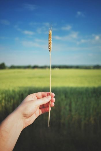 Cropped image of hand holding grass at field