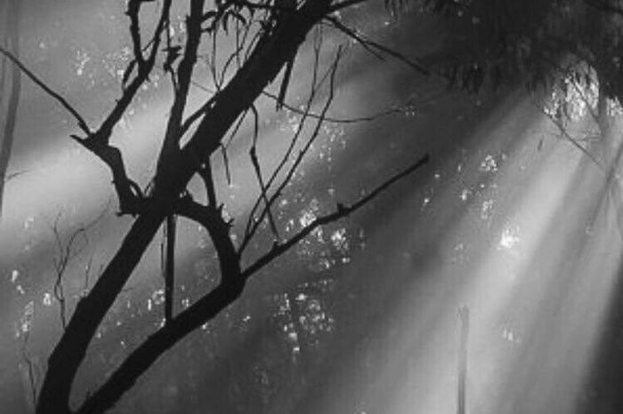 Tree Nature Hiding Sun Forest Photography Lights And Shadows Tree Area Day Beauty EyeEm Gallery Sun Blackandwhite Streamzoofamily Black & White Italy🇮🇹 Photography