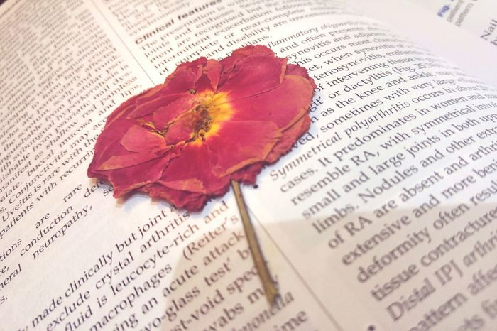 Book Open Education Indoors  Rose - Flower Page Flower Paper Information Reading Single Flower Petal . Flower Head Medicine Student Red Book Open Literature Education Indoors  Rose - Flower Page Flower Paper