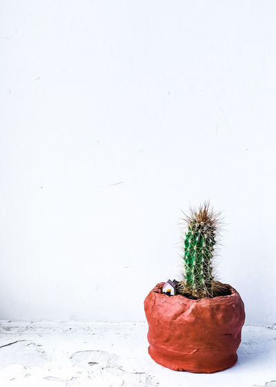 Potted plant on snow covered land