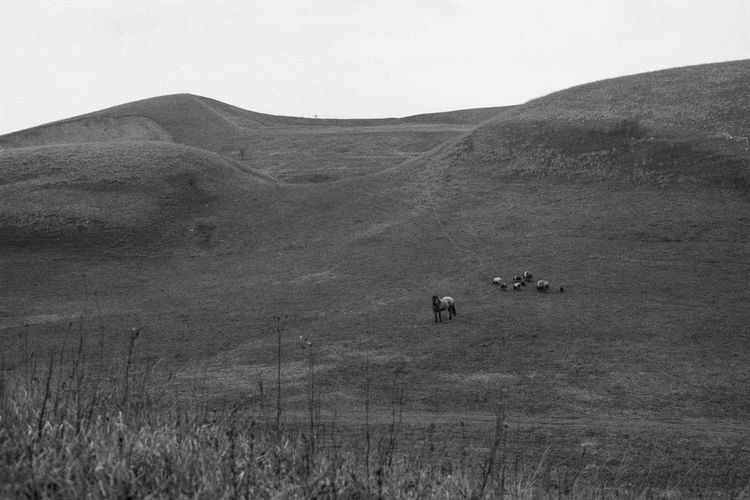 35mm Film Analogue Photography Blackandwhite Cow Grass Hill Horse Landscape Mountain Nature Non-urban Scene Outdoors Scenics Sky