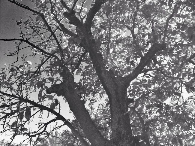 Blackandwhite Strolling Spring Eye4photography