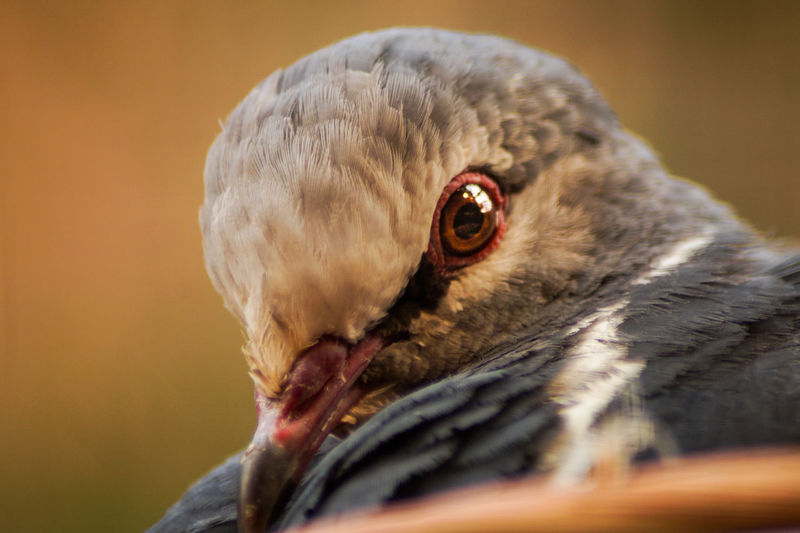 Portrait of a bird One Animal Animal Themes Animal Bird Close-up Vertebrate Animals In The Wild Animal Wildlife Animal Body Part Bird Of Prey Beak No People Focus On Foreground Animal Head  Day Nature Portrait Selective Focus Eye Outdoors Animal Eye Profile View