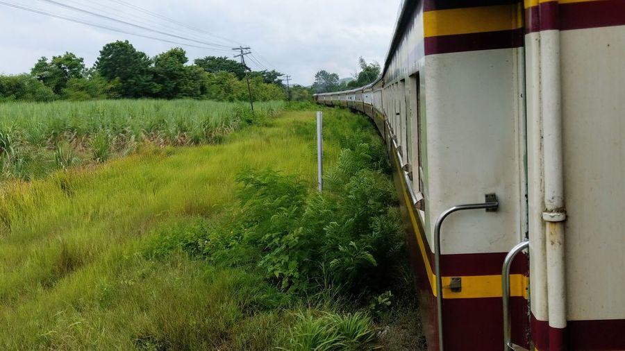 Train Tree