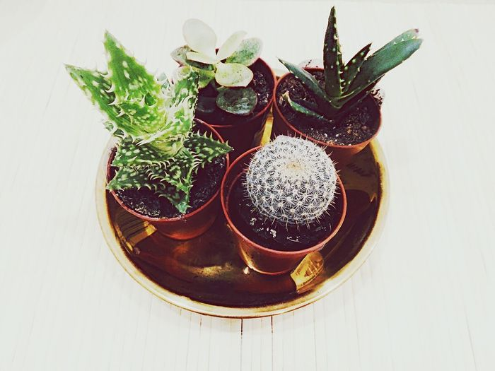 Plant Table No People Growth Day Nature Succulents Succulent Plants SucculentsLover Succulent