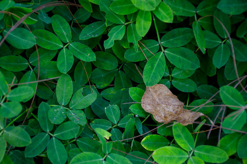 Beauty In Nature Close-up Fragility Green Color Growth Leaf Leaves Nature No People Outdoors Plant Plant Part