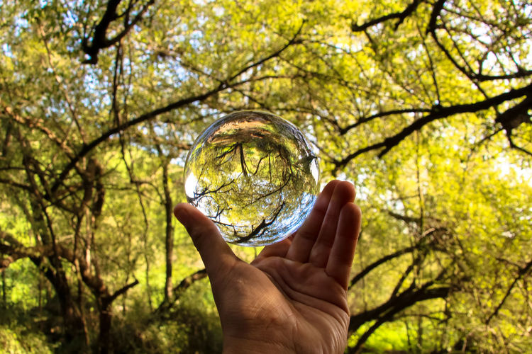 Cropped hand holding crystal ball against trees at forest