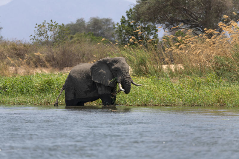 View of elephant drinking water from land
