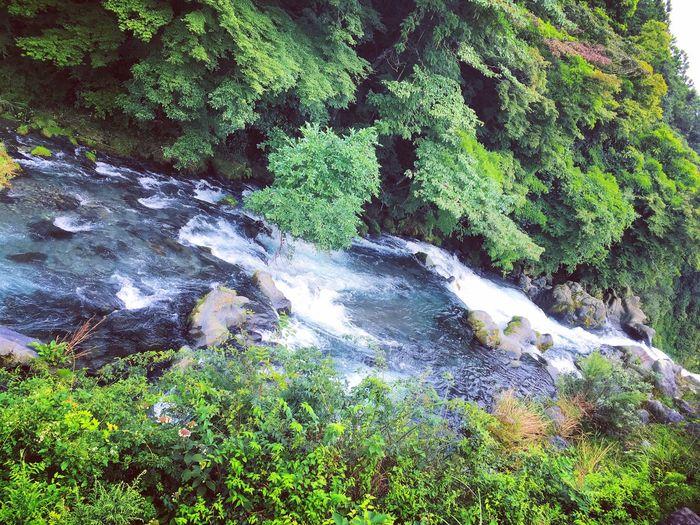 Waterfall Japan Fujinomiya Shiraitonotaki Falls Summer Good Day Good Energy With Good Friend Fresh Air... EyeEm Best Shots EyeEm Nature Lover 2017 Let's Have Sweet With Latte