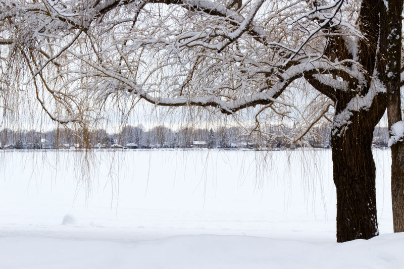 Winter scenery by the lake with a willow tree covered of snow Bare Tree Beauty In Nature Blizzard Branch Cold Temperature Day Environment Extreme Weather Frozen Land Nature No People Non-urban Scene Outdoors Plant Scenics - Nature Snow Snowing Tranquil Scene Tranquility Tree White Color Willow Willow Tree Winter