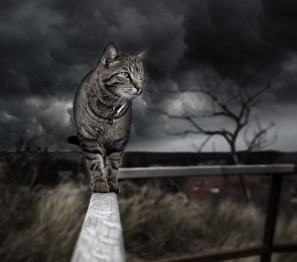 Cat Nature Amazing EyeEm Nature Lover Landscape Field Forest Tree Love Beauty In Nature Natural Beauty Kitten Beautiful Nature Morning EyeEm Best Shots - Nature Beautiful Sweet Dream Cute Animals In The Wild Animal Love Cats Of EyeEm Looking At Camera Art Amazing Nature First Eyeem Photo