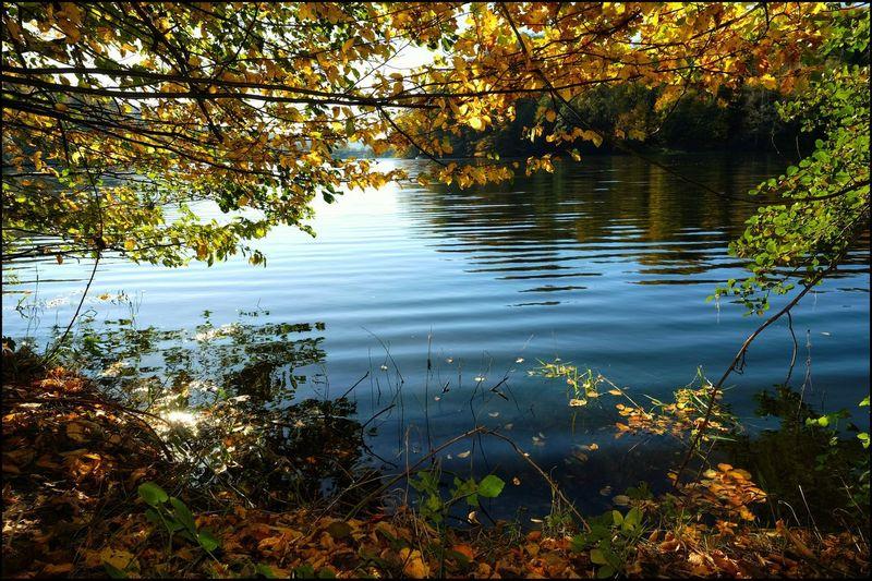 Nature Beauty In Nature Autumn Wasser,Twistesee