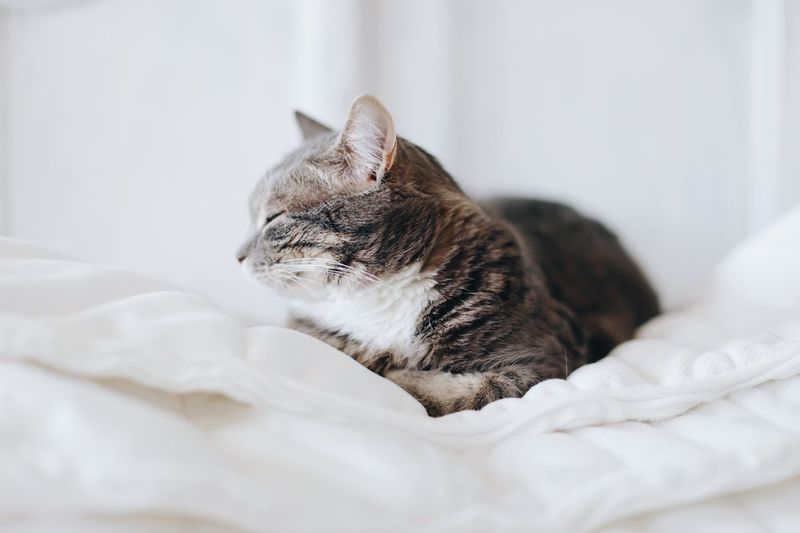 Sleeping beauty Softness Room For Text Copyspace Copy Space White Background Pet Portraits Pet Cute Cute Cats Fur Pets Animal Themes Domestic Animal Domestic Cat One Animal Domestic Animals Looking Away Textile No People Furniture Feline Bed Cat Relaxation Vertebrate Indoors  Mammal Home Interior Bedroom