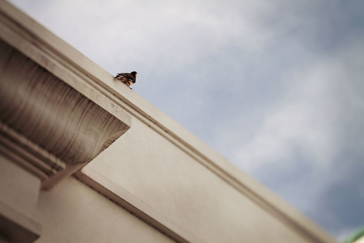 Bird on rooftop Best EyeEm Shot Bird Photography Birds Of EyeEm  Ceiling Roof Rooftop Sky And Clouds The Week on EyeEm Animal Themes Architecture Bestoftheday Bird Birds Building Building Exterior Built Structure City Day No People One Animal Outdoors Perching Sky
