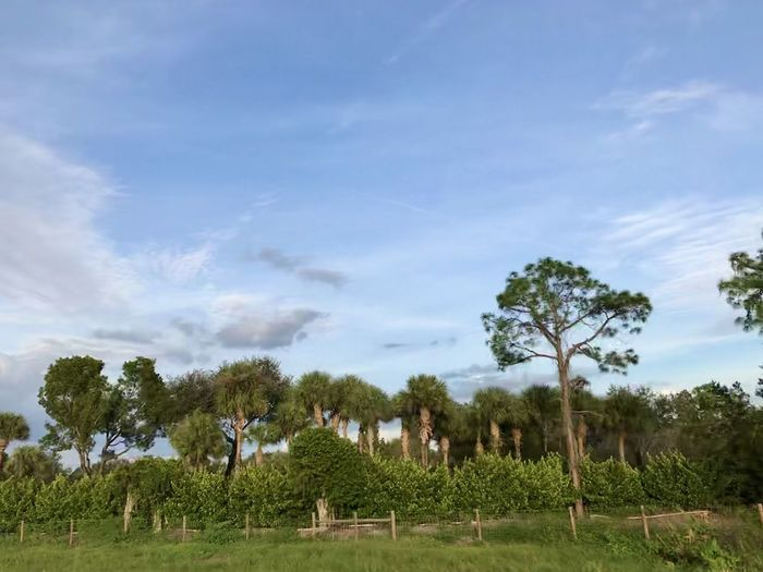 Miami ✨ Plant