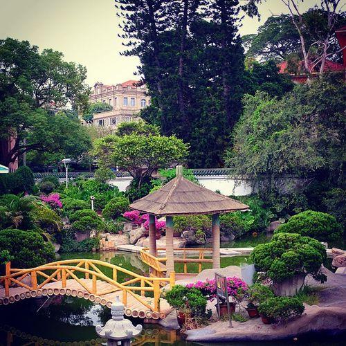 菽莊花园 花园 Garden 园林 green 绿色 菽莊花园非常漂亮。当年的主人是个有品位的人