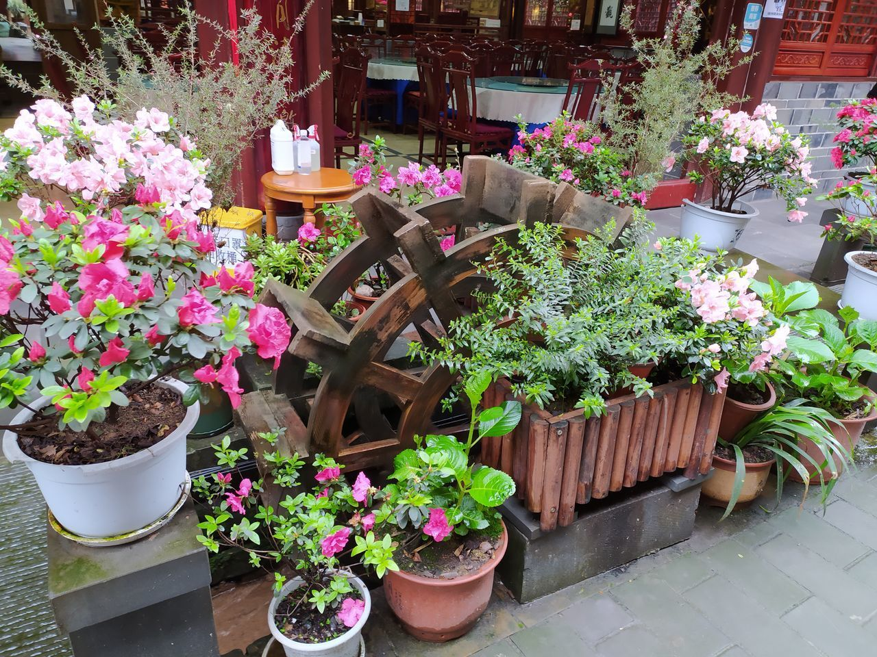 POTTED PLANTS AND FLOWERS ON TABLE AGAINST PLANT