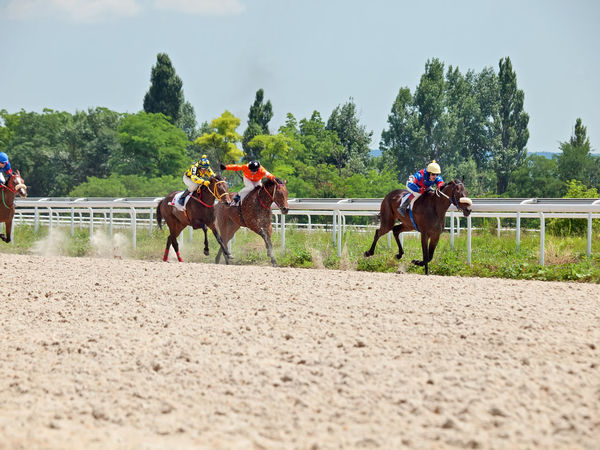 Adult Animal Themes Competition Day Domestic Animals Horse Mammal Nature Outdoors People Riding Sports Race Tree