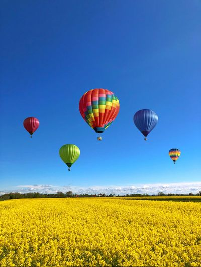 Field Colza Rapeseed Yellow Nature Sky Horizon Blue Balloon Flying Freedom Multi Colored Air Vehicle Mid-air Transportation Environment Hot Air Balloon Landscape Adventure Travel Scenics - Nature Beauty In Nature Tranquil Scene Clear Sky Plant Vibrant Color Outdoors No People Ballooning Festival