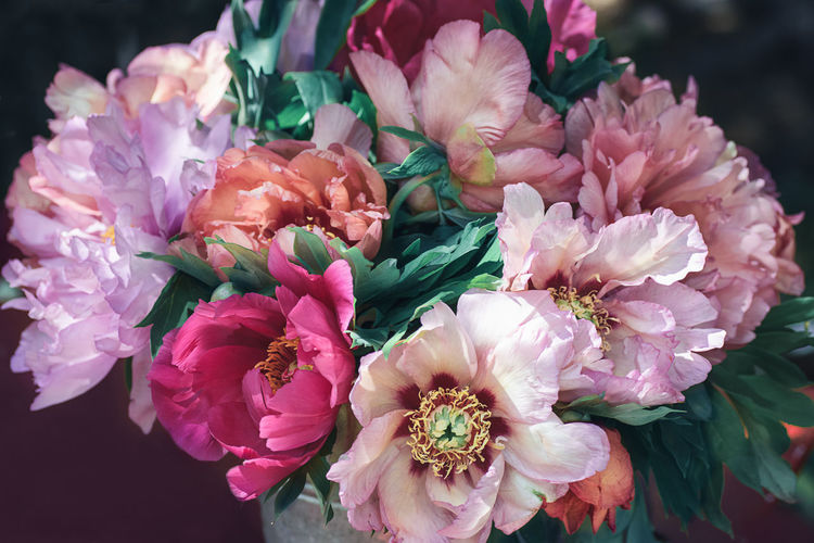 Beautiful bouquet of pink and purple peonies Beauty In Nature Botany Bouquet Bunch Of Flowers Close-up Day Floral Flower Flower Arrangement Flowering Plant Foliage Fragility In Bloom Nature Peonies Bloom Peonies In Bloom Petal Pink Color Tender
