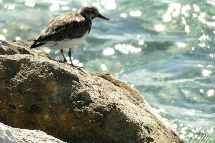 Bird Photography Nature EyeEm Nature Lover Naturaleza Bahamas Bahamas Cococay