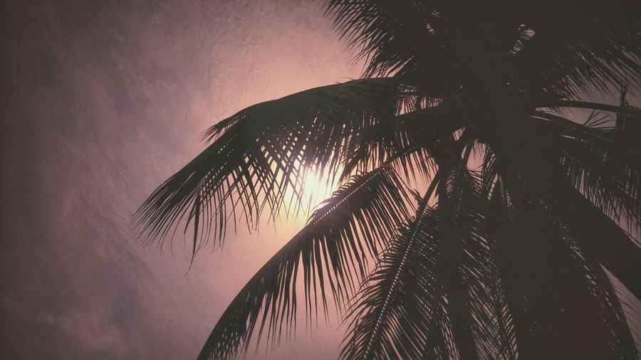 Low Angle View Of Silhouette Palm Tree Against The Sky