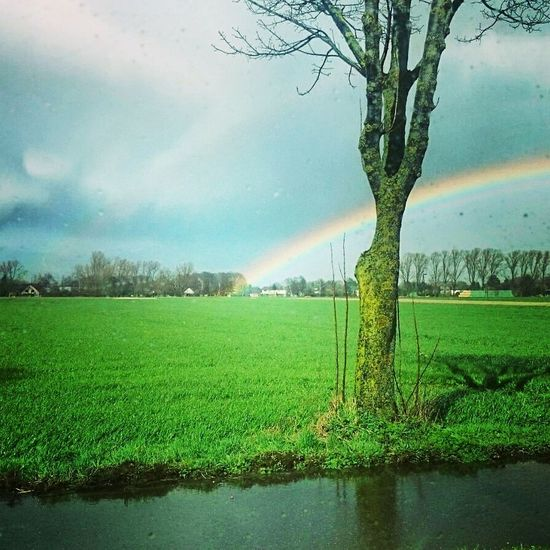 Rural Scene Agriculture Field Landscape Green Color Beauty In Nature Nature Outdoors Tree Rainbow RainyDay Raindropshot The Great Outdoors - 2017 EyeEm Awards EyeEmNewHere