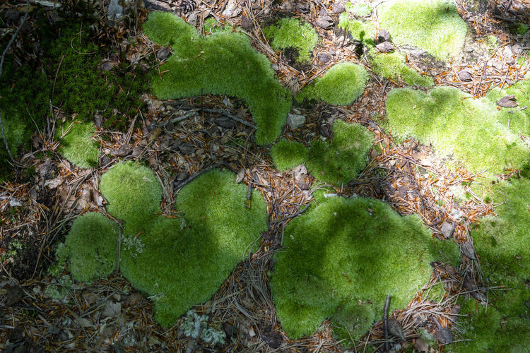 Moss & Lichen Musk Heart Heart Shape Rainforest Leaves Tree Trunk Trunk Covering Water Outdoors Full Frame Tranquility Beauty In Nature Forest Leaf Moss Plant Part Tree Day Land No People Nature Growth Plant Green Color Undergrowth