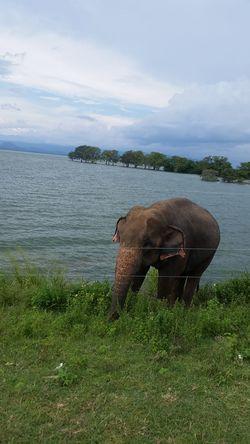 Animal Animal Themes Animals In The Wild Day Elephant One Animal Wildlife Zoo