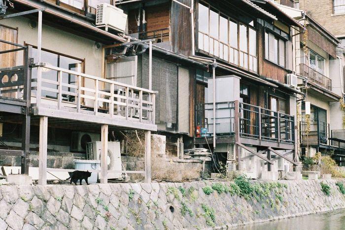 ご苦労さまです Cat Snapshot Nostalgia Film Natura1600 Oldlens Leica Japan