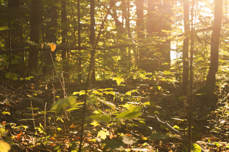 Plants and trees in forest on sunny day