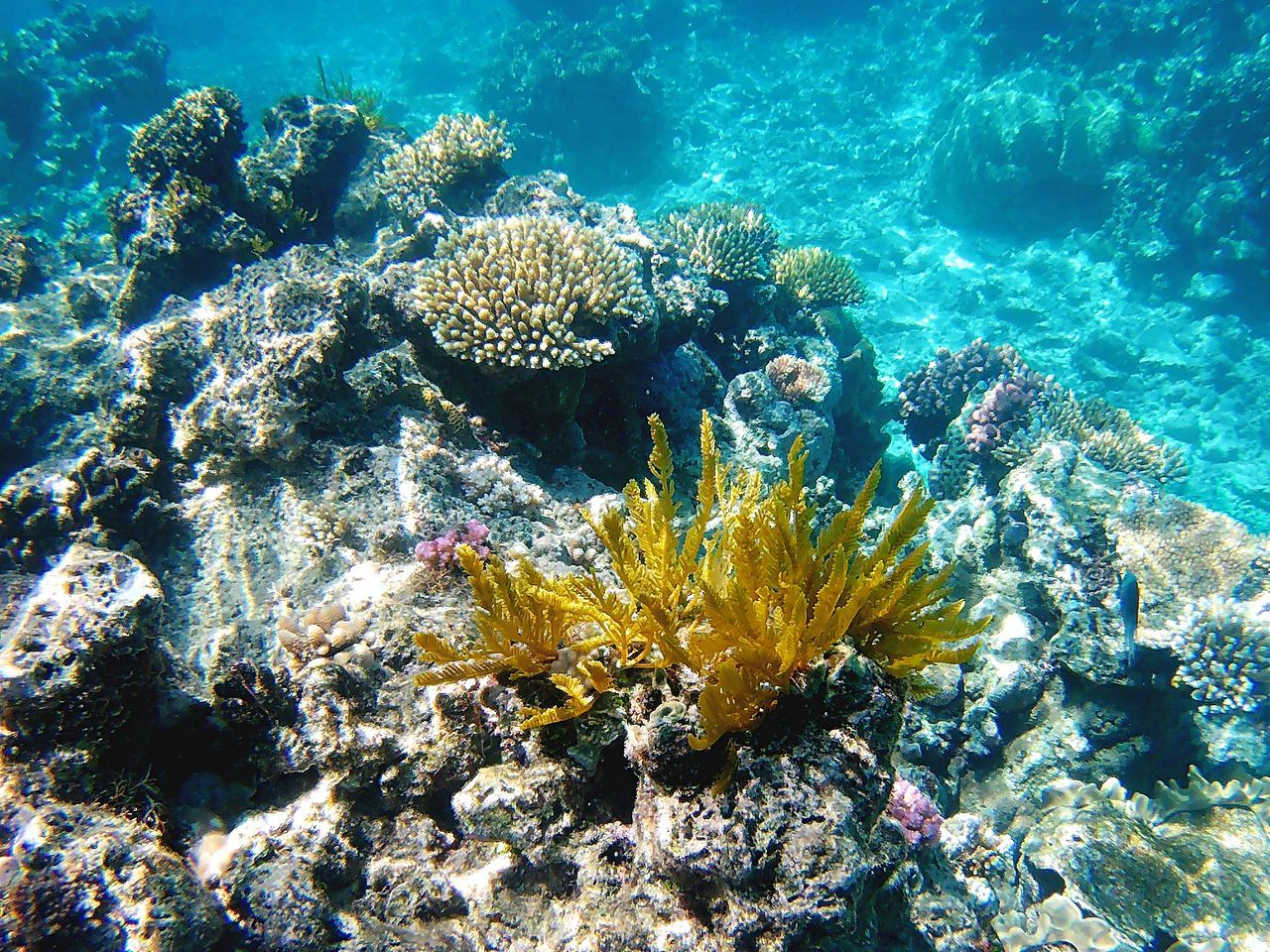 Close-Up Of Coral Undersea
