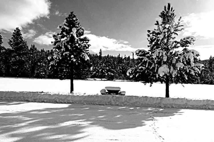 Vehicles parked in front of trees against sky on sunny day