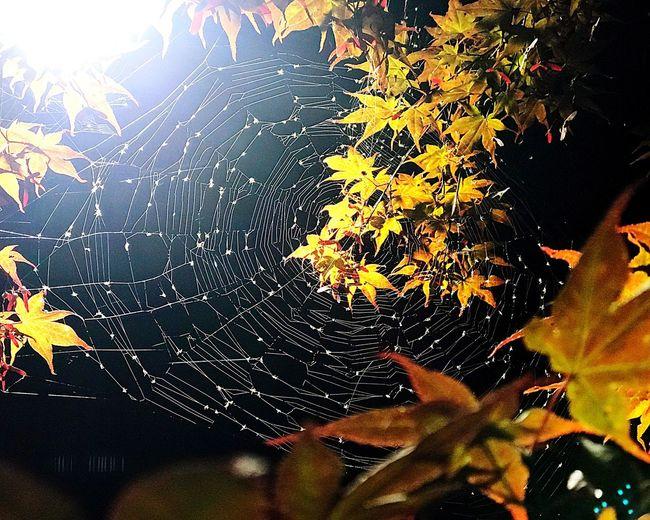 Web Web Webstagram Nature Spider Web Autumn Leaf IPhoneography 많이 먹었네~
