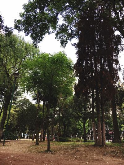 Tree Plant Growth Nature Beauty In Nature Day Park Park - Man Made Space Sky Green Color Field Tranquility People