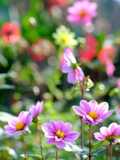 Daria Nature Flowers Autamn Naturelovers Nature_collection Natural EyeEm Nature Lover Purpleflowers Purple