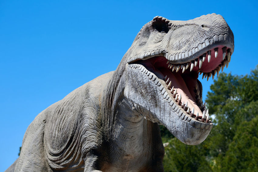 Algar, Spain - April 8, 2017: Realistic model of a Tyrannosaurus Rex in the Dino Park Algar. It is a unique entertainment and educational park. Spain T-rex älgar Amusement Park Angry Animal Carnivorous Day Dino Dino Park DinoPark Dinosaur Entertainment Extinct Extinction Huge Hunter Jurassic World No People Outdoors Paleontology Realistic Model Sky SPAIN Tyrannosaurus Tyrannosaurus Rex