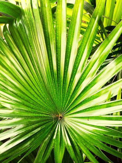 Tropicals in