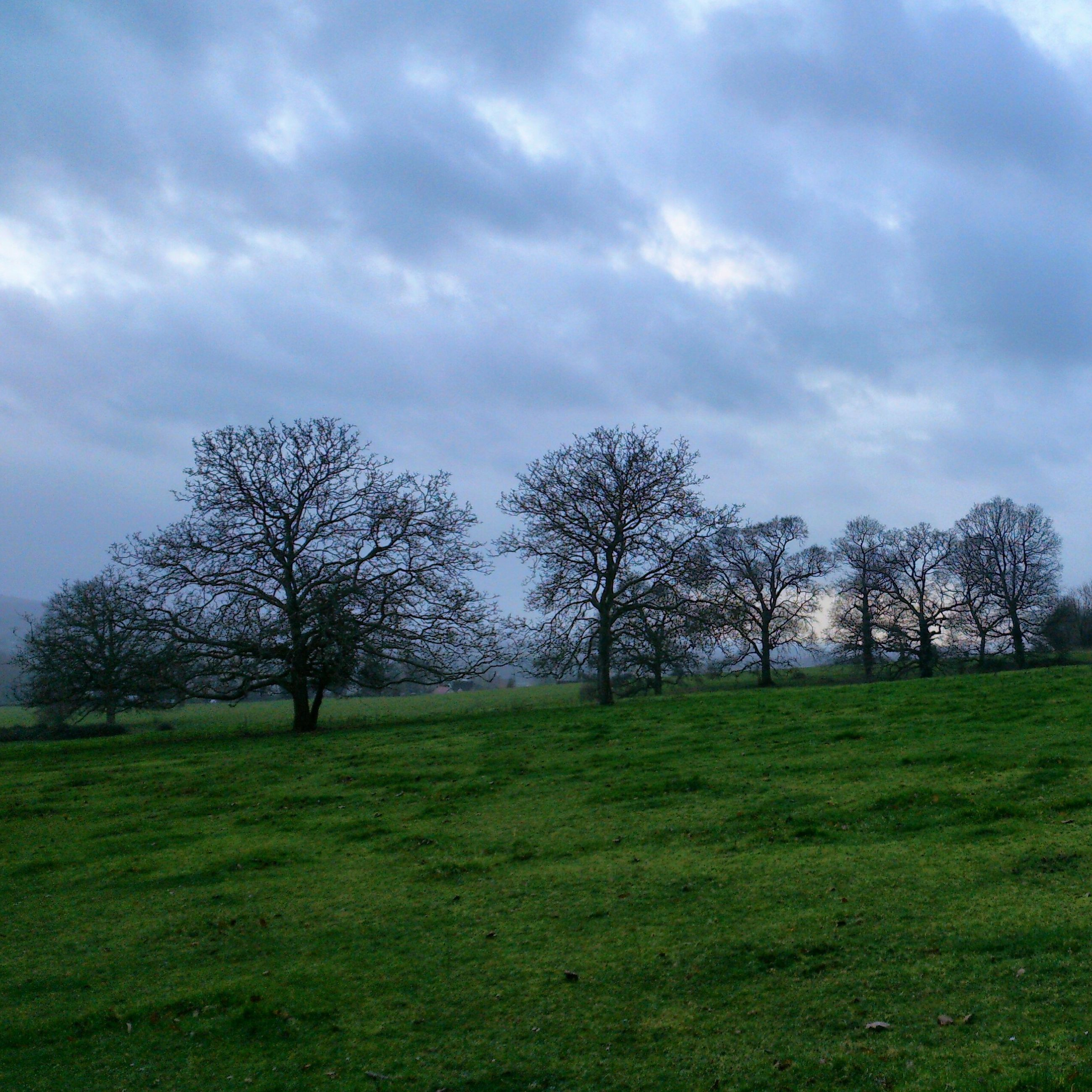 grass, tree, sky, tranquility, field, bare tree, tranquil scene, landscape, grassy, cloud - sky, scenics, beauty in nature, nature, green color, cloudy, branch, cloud, growth, non-urban scene, tree trunk