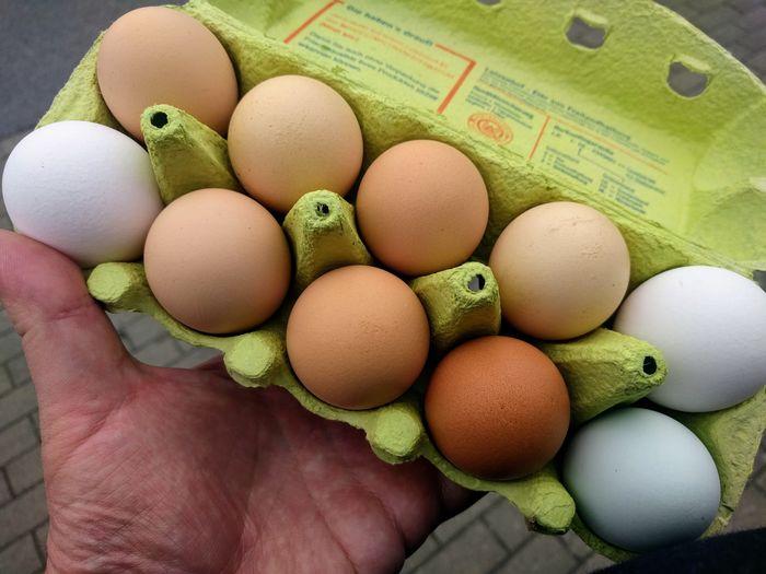 10 Eier Egg Carton Green Egg Brown Eggs White Eggs Bio In Hand Human Hand Easter Egg Carton Raw Food Egg Close-up Food And Drink Eggshell Eggcup Animal Egg Fragility The Natural World