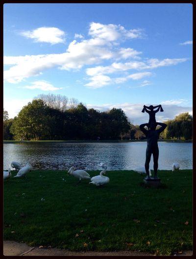 Swan Swans Blue Sky Nature