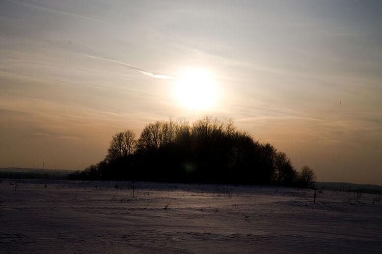 Sunset Tree No