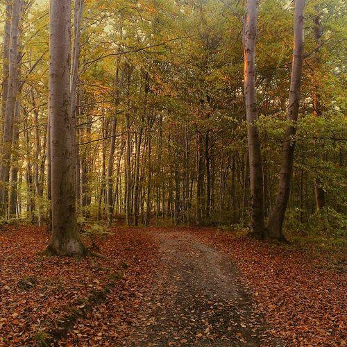 Winter is coming Vscocam Vzcopoland Vzcogood Vzcopolskazlota autumn trees forest nature_seekers nature