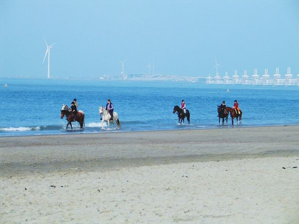 Sea Real People Water Beach Men Netherlands Sky Sand Nature Domestic Animals Horizon Over Water Outdoors Lifestyles Horse Clear Sky Working Animal Day Mammal Beauty In Nature Large Group Of People Horses Beachphotography Tranquil Scene Tranquility EyeEm Nature Lover