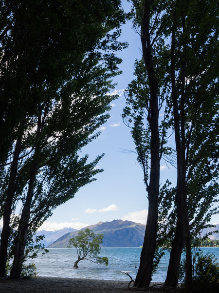 Still walking around the tree... Alpine Holiday Travel Wanaka Adventure Alps Beauty In Nature Day Landscape Mountain Nature No People Outdoors Place To Be  Place To Visit Scenics Sky Tranquil Scene Tranquility Travel Destinations Travel The World Tree Wanaka Tree Wanakalake Water Adventures In The City