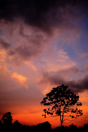 Sky Tree Cloud - Sky Sunset Plant Beauty In Nature Silhouette Scenics - Nature