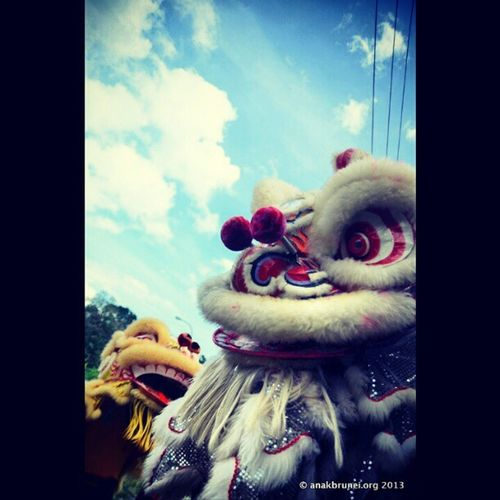 Lions from this morning Andrography Brunei InstaBruDroid GongXiFaCai2013
